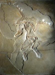 berlin-archaeopteryx