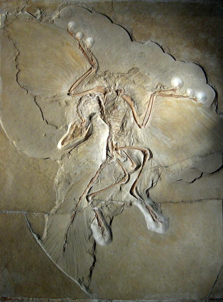 berlin archaeopteryx.jpg